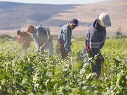 Beyond the Virus: Worldwide Crop Picking Labor Shortfall