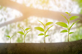 What Do Fast Growing Green Startups Have to Offer?